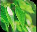 listerine-eucaliptol